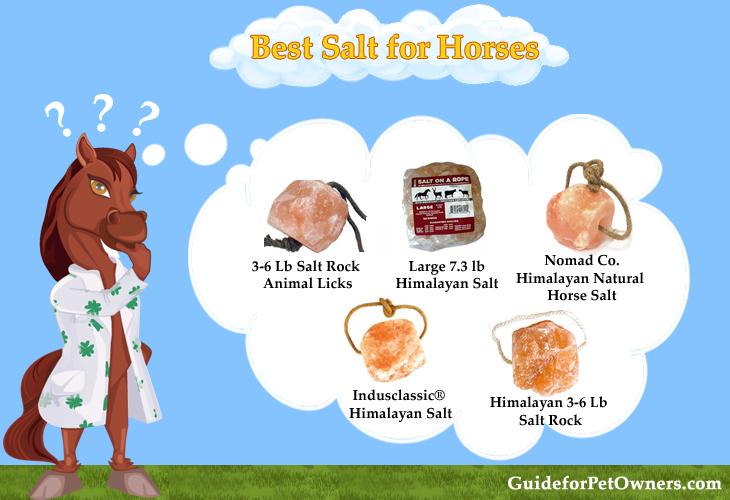 Best Salt for Horses