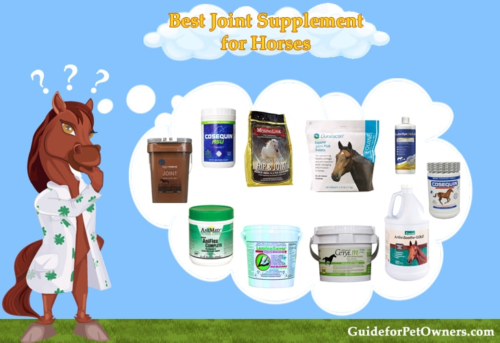 Best Joint Supplement for Horses - Buyer's Guide